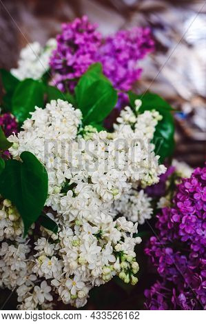 White And Purple Bouquet Of Lilacs Close-up