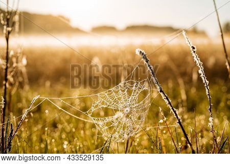 A Web With Dew Between Meadow Blades Of Grass, Dew Sparkles Due To The Suns Rays. The Meadow Is Cove