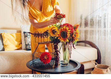 Close Up Of Bouquet Arrangement. Woman Puts Sunflowers And Zinnias In Vase On Table At Home. Fresh F