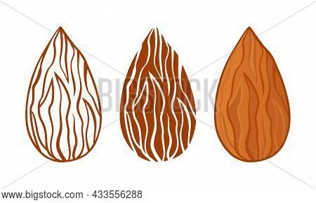 Almond Silhouettes Vector Icon, Whole Nuts Seeds Set, Line And Flat Design Isolated On White Backgro