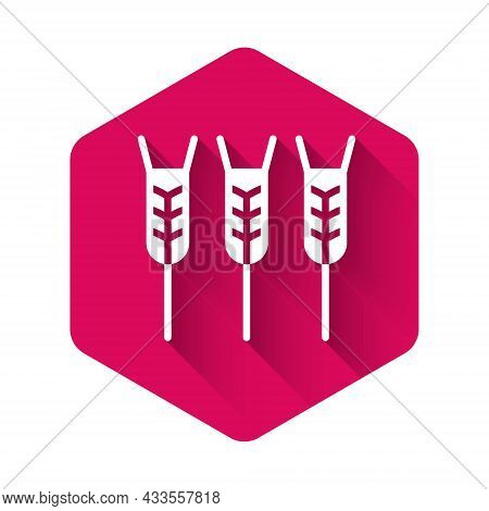 White Cereals Set With Rice, Wheat, Corn, Oats, Rye, Barley Icon Isolated With Long Shadow. Ears Of