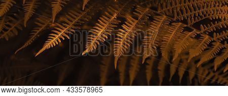 Natural Autumn Blurred Background Of Brown Fern Leaves. Selective Focus, Banner Format