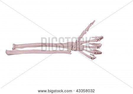 Count 1- Hand Of Bones
