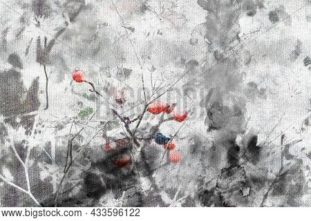 Red Ripe Berries On A Winter Bush In The Woods. Frozen Fruits On Branches Covered With Frost And Sno