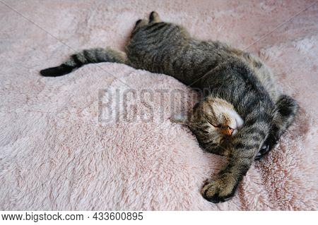 The Tabby Cat Sleeps On A Beige Fluffy Bedspread. Copy Space.