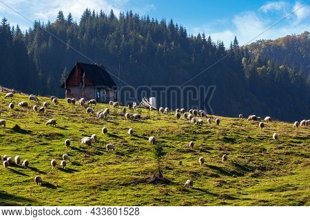 Flock Grazing On The Grassy Meadow. Shepherd Shed On The Hill Near The Forest. Apuseni Natural Park,