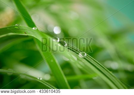 A closeup of water drops on green leaf after raindrops