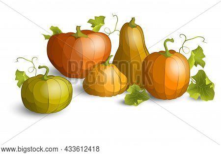 Pumpkin Set For Thanksgiving Or Halloween Day. Fall Harvest Pumpkins. Banner Design Template For Mar