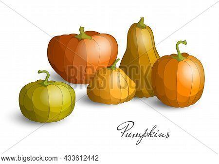 Pumpkin Set For Thanksgiving Or Halloween Day. Fall Harvest Pumpkins. Horizontal Banner Design Templ