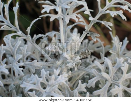 Gray soft Plant leaves extreme close up poster