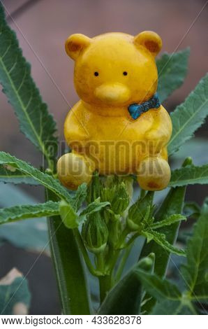 Selective Focus On Yellow Teddy Bear On Ladyfinger Plant Isolated With Green Blur Background In The