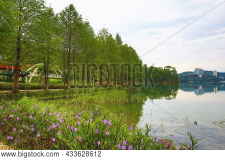 Amazing View Of Lake With Bald Cypress Trees And Purple Flowers In The Morning
