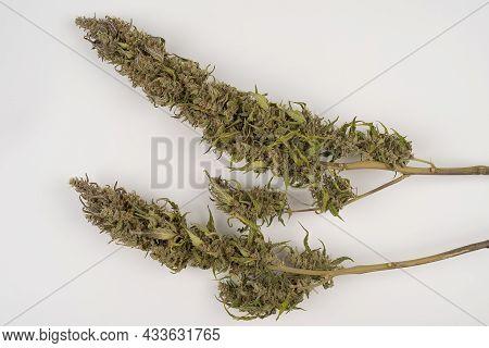 Purple Marijuana Buds On A White Table. Dried Marijuana Buds Stock Images. Dried Hemp Leaves On A Wh