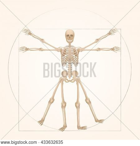 Vitruvian Skeleton - Sacred Geometry In Graphic Art Represented By A Skeleton Figure With Anatomical