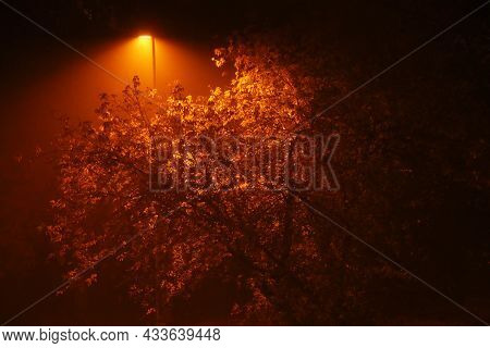 Autumn Tree At Night In The Fog Illuminated By A Lantern. Beautiful Autumn Background At Night In Th