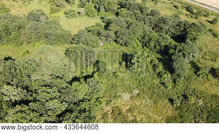 Young Developing Forest, Aerial View. Small Grove.
