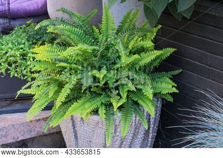 Green Plants In Pot In Courtyard For Landscape Design. Plants For House. Green House. Residential De