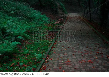 Enchanted Deep Park With Evergreen Plants And Grass And Autumn Falling Leaves On Paved Footpath Way