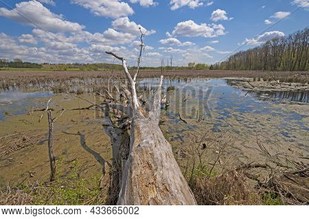 Dead Tree Stretching Into The Wetlands In The Horicon Marsh In Wisconsin