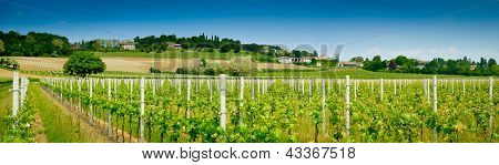 Vineyard and winery panoramic view in spring near Udine Friuli Italy poster