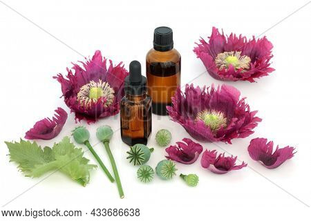 Poppy flowers and seed heads with medicine bottles. Seeds used in alternative natural medicine and also used in the food industry.