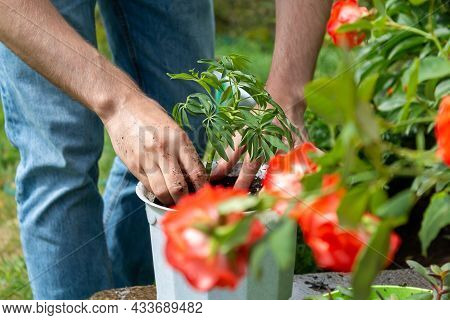 Young Caucasian Farmer In Jeans Plants Plant In White Pot Standing In Garden. Close Up. Focus On Han