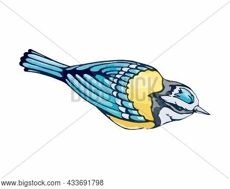 Small Titmouse With Blue And Yellow Plumage In Watercolor Style. Spring Songbird From A Garden Or Fo