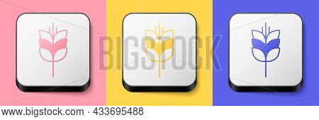 Isometric Cereals Set With Rice, Wheat, Corn, Oats, Rye, Barley Icon Isolated On Pink, Yellow And Bl