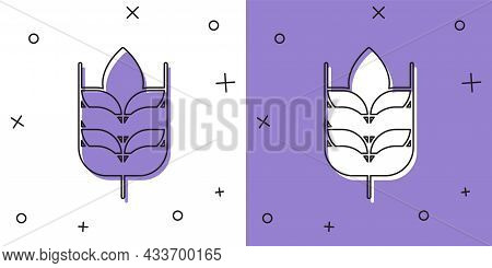 Set Cereals Set With Rice, Wheat, Corn, Oats, Rye, Barley Icon Isolated On White And Purple Backgrou