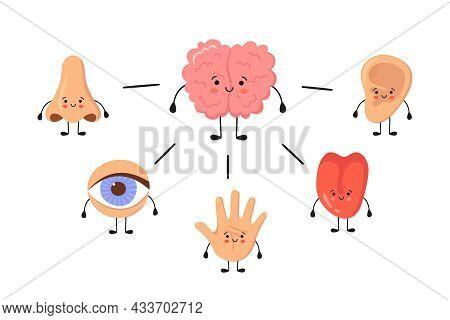 Brain And Five Human Senses Organs Kawaii Characters. Nose, Ear, Hand, Tongue And Eye. Cute Sensory