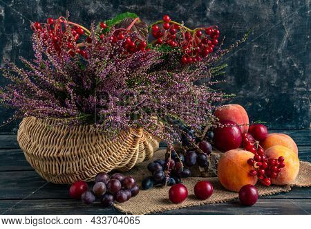 Autumn Still Life On A Black Background, Basket With Heather And Viburnum And Fruits