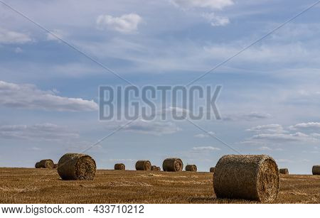 Agricultural Field With Prickly Straw From Wheat, The Grain From Which Was Collected For Food, Wheat