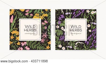 Square Backgrounds With Wild Herbs Frames. Botanical Retro Cards With Field And Meadow Flower Plants