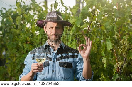 Bearded Winemaker Man In Hat Hold Wineglass At Vineyard Outdoor With Ok Gesture, Wine