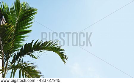 Palm Tree With Blue Sky Background, Copy Space Text Area, Wide Composition.