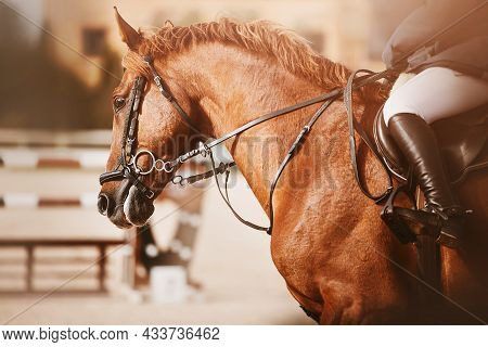 Portrait Of A Racehorse Sorrel Beautiful Horse With A Rider In The Saddle, Which Quickly Jumps Aroun