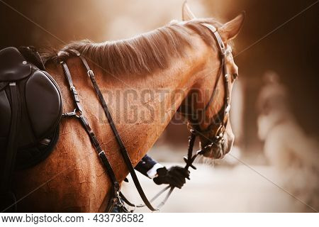A Beautiful Bay Horse With A Dark Mane And A Saddle On Its Back Stands, Held By The Rein By The Ride