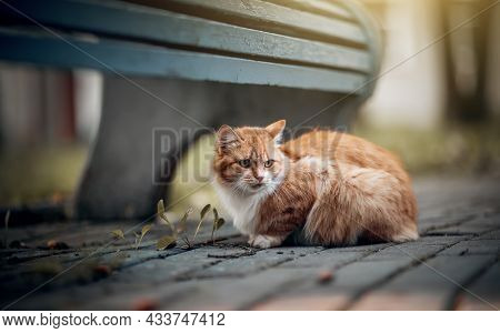 Portrait Of A Cat In Nature. Homeless Street A Red-haired Cat Is Sitting Near A Bench. A Lost Cat Wi