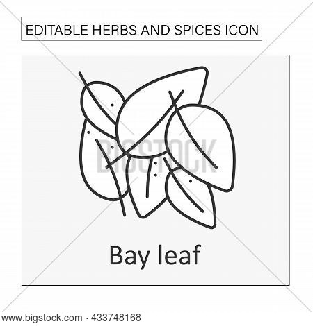 Bay Leaf Line Icon. Aromatic Dried Leaf For Food Preparation. Strong-smelling Seasoning. Herbs And C