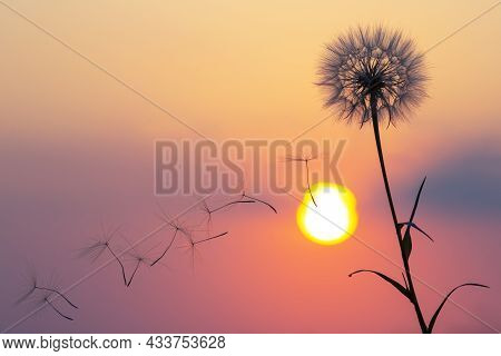Silhouettes Of Flying Dandelion Seeds On The Background Of The Sunset Sky. Nature And Botany Of Flow