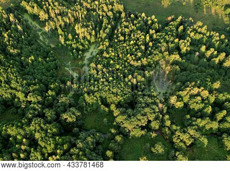 Swamp With Trees In The Forest. The Concept Of Ecology And Environmental Protection. Scene Riverine
