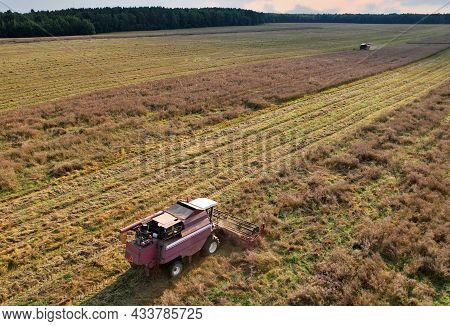 Combine Harvester Working In Rapeseed Field. Harvesting Machine During Cutting Crop In A Farmland. C