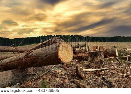 Felled Tree Against The Sunset. Cutting Trees At Forests Area. Stacks Of Cut Wood. Deforestation For