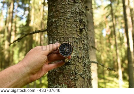 Compass On Tree In The Forest. Tourist Compass For Orientation On The Terrain. Magnetic Declination