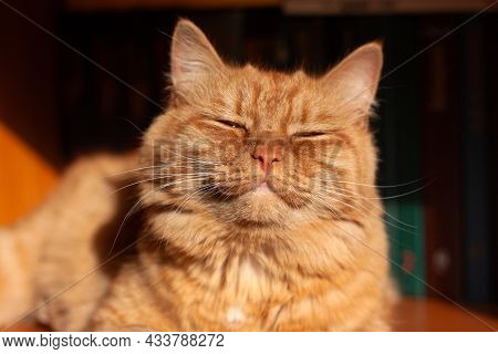 A Bright Red-haired, Contented Cat Is Lying In The Sun, Her Muzzle Raised Up, Her Eyes Closed