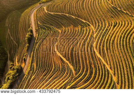 Picturesque Drone View Of Hilly Valley With Curvy Rows Of Green Vineyard And Road In Sunny Summer Da
