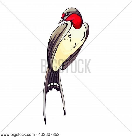 Country Swallow Or Swift In Vintage Style. Spring Bird With Long Plumage And Tail In Watercolor Styl