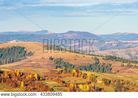 Autumnal Countryside Landscape In Evening Light. Rural Fields By The Coniferous Forest On Rolling Hi