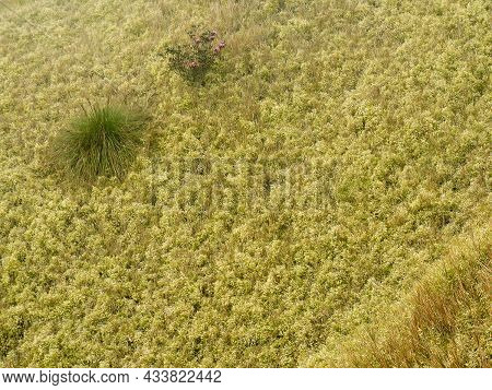 A Green Plant On Yellow-green Grassland For Nature Theme Background.
