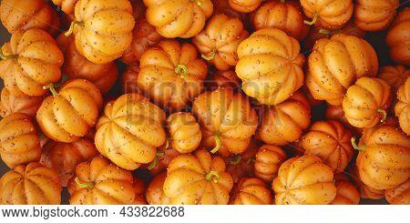 Festive Pumpkins harvest pattern. Heap of ripe orange pumpkin vegetables autumn background for Halloween holiday. 3d rendering